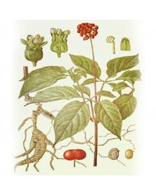 Набор шампуров для шашлыка 4 штуки 65см
